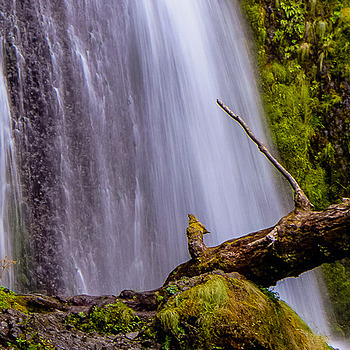 Columbia River Gorge Waterfall | LENS MODEL NOT SET <br> Click image for more details, Click <b>X</b> on top right of image to close