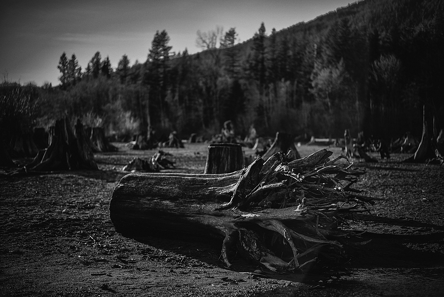 Another Fallen Giant | LEICA SUMMILUX-M 1:1.4/50 ASPH <br> Click image for more details, Click <b>X</b> on top right of image to close