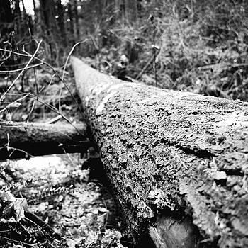 A Fallen Giant | LEICA ELMARIT 28MM F2.8 ASPH <br> Click image for more details, Click <b>X</b> on top right of image to close