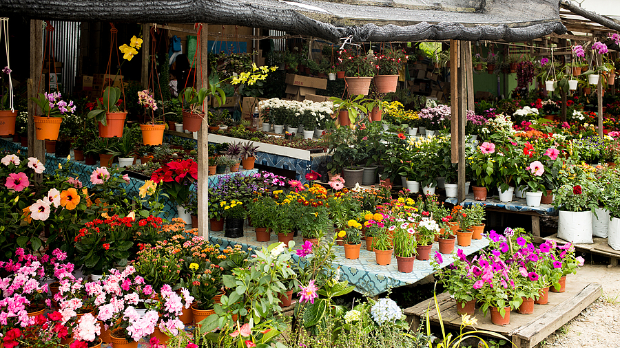 flower stalls | LEICA SUMMILUX 35MM F1.4 ASPH <br> Click image for more details, Click <b>X</b> on top right of image to close