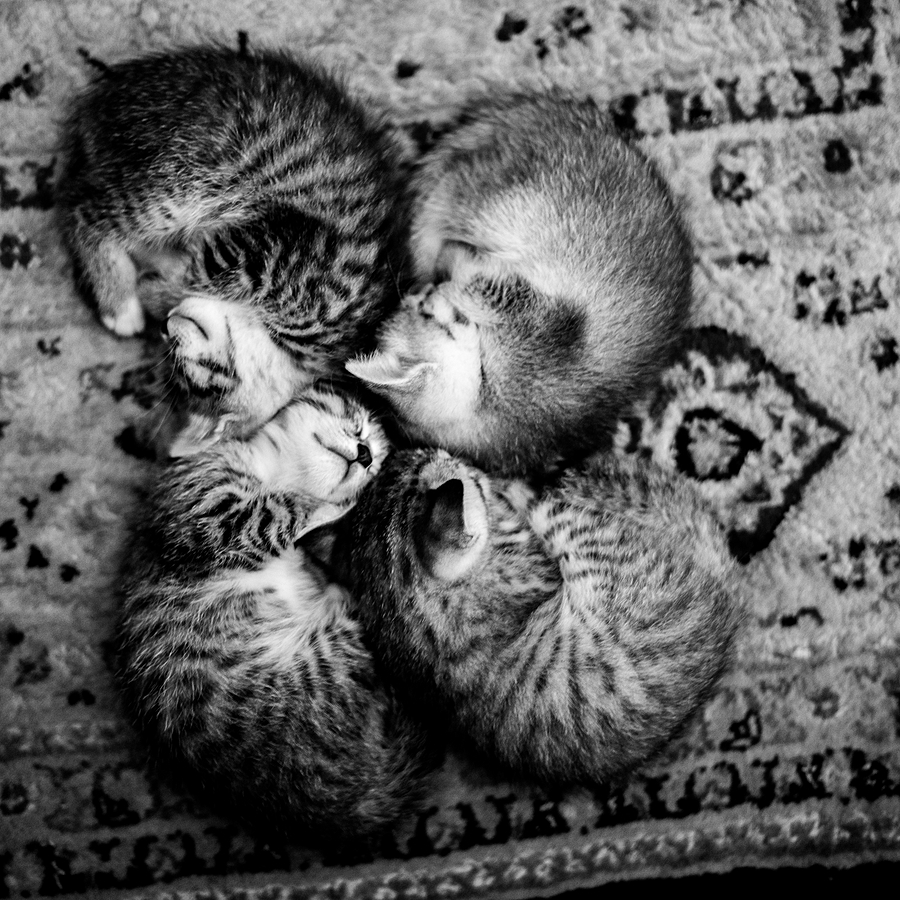 4 kitties | LEICA SUMMILUX 35MM F1.4 ASPH <br> Click image for more details, Click <b>X</b> on top right of image to close
