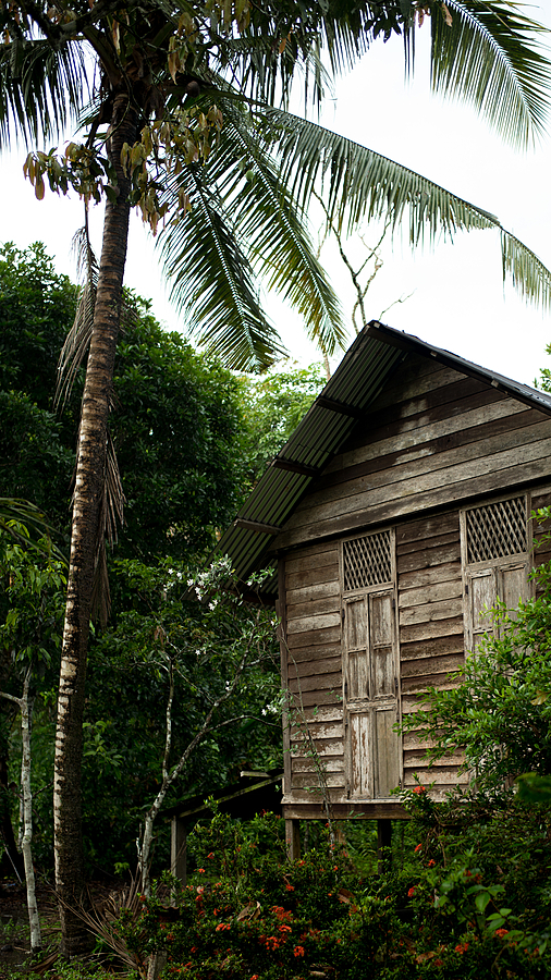 Old house and coconut tree | LEICA SUMMILUX 35MM F1.4 ASPH <br> Click image for more details, Click <b>X</b> on top right of image to close