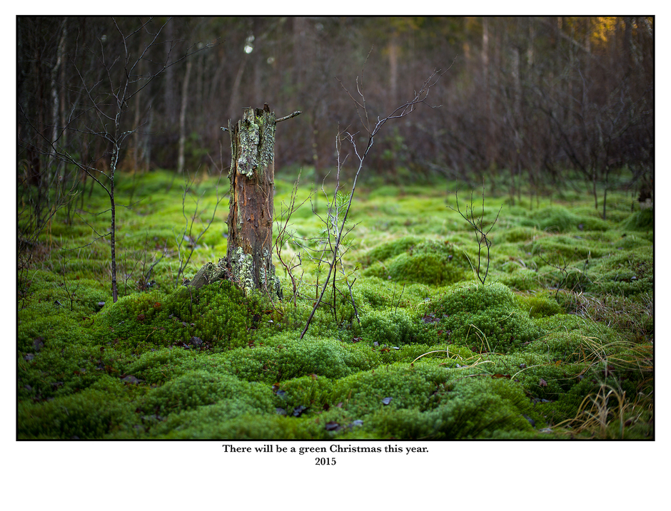 There will be a green Christmas this year. | SUMMILUX-M 1:1.4/50 ASPH <br> Click image for more details, Click <b>X</b> on top right of image to close