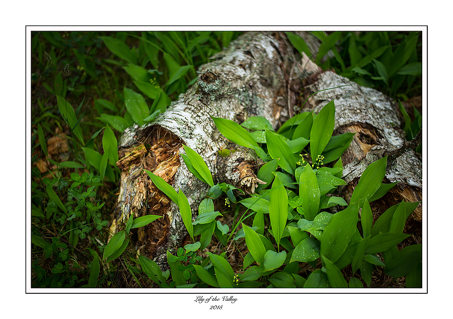 Longing for Spring. | SUMMILUX-M 1:1.4/50 ASPH <br> Click image for more details, Click <b>X</b> on top right of image to close