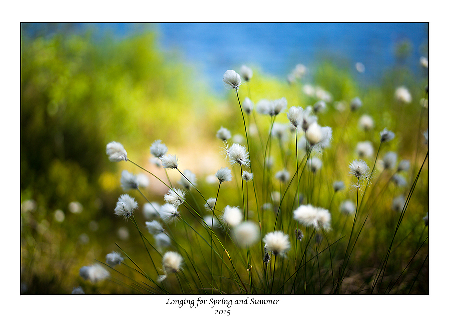 Longing for Spring and Summer. | SUMMILUX-M 1:1.4/50 ASPH <br> Click image for more details, Click <b>X</b> on top right of image to close