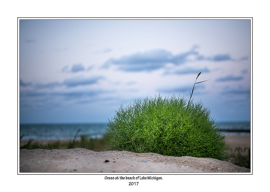 Grass... | SUMMILUX-M 1:1.4/50 ASPH <br> Click image for more details, Click <b>X</b> on top right of image to close