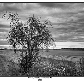 Lonely tree by the roadside. | LEICA SUMMICRON 35MM F2 ASPH <br> Click image for more details, Click <b>X</b> on top right of image to close
