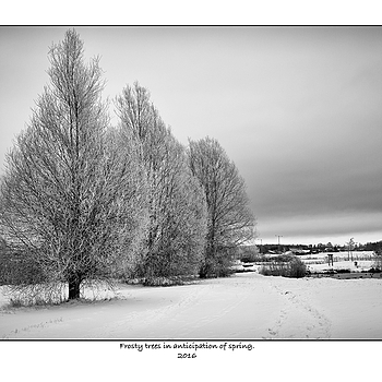 Frosty trees. | LEICA SUMMICRON 35MM F2 ASPH <br> Click image for more details, Click <b>X</b> on top right of image to close