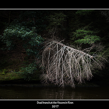 Dead branch. | SUMMILUX-M 1:1.4/50 ASPH <br> Click image for more details, Click <b>X</b> on top right of image to close