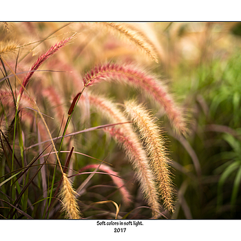 Soft colours. | SUMMILUX-M 1:1.4/50 ASPH <br> Click image for more details, Click <b>X</b> on top right of image to close