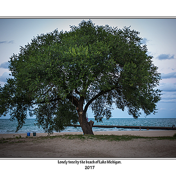 Lonely tree. | SUMMILUX-M 1:1.4/50 ASPH <br> Click image for more details, Click <b>X</b> on top right of image to close