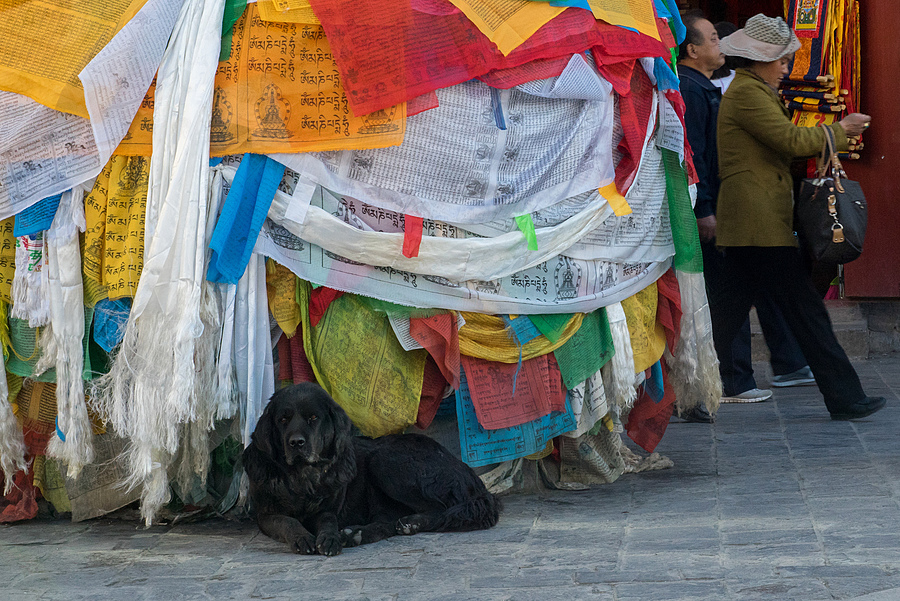 Jokhang Temple in Lhasa | LEICA SUMMILUX 50MM F/1.4 PRE ASPH (E43) <br> Click image for more details, Click <b>X</b> on top right of image to close