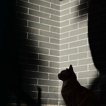 cat dark shadow | APO-SUMMICRON-M 75MM F/2 ASPH <br> Click image for more details, Click <b>X</b> on top right of image to close