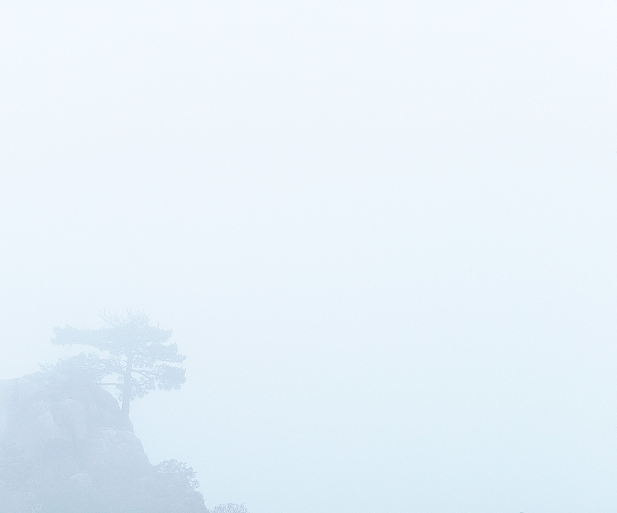 Huangshan mountain pine in fog | LEICA APO-SUMMICRON 90MM F2 ASPH <br> Click image for more details, Click <b>X</b> on top right of image to close