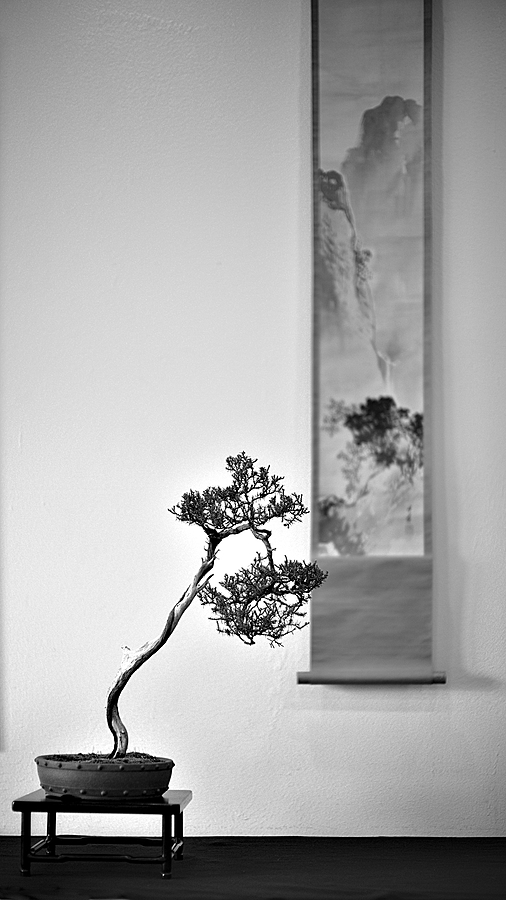 Literati Style Bonsai | LEICA NOCTILUX 50MM F0.95 ASPH <br> Click image for more details, Click <b>X</b> on top right of image to close