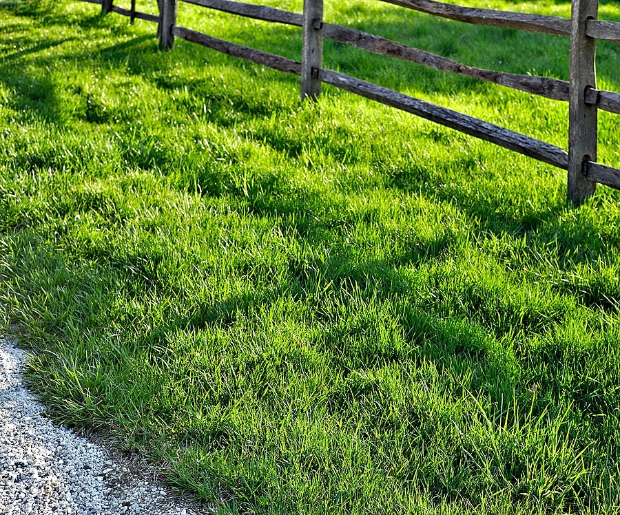 Grass, fence and a little gravel | LEICA SUMMICRON 50MM F2 <br> Click image for more details, Click <b>X</b> on top right of image to close