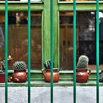 cactus on window sill