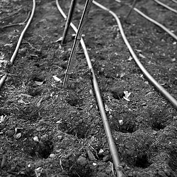 irrigation lines | LEICA SUMMICRON 28MM F2 ASPH