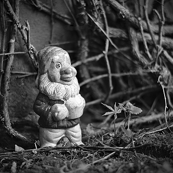 Garden Gnome | LEICA APO-SUMMICRON 90MM F2 ASPH <br> Click image for more details, Click <b>X</b> on top right of image to close