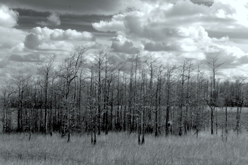 Infrared at Grassy Waters Preserve | LEICA ELMAR 50MM F2.8 <br> Click image for more details, Click <b>X</b> on top right of image to close