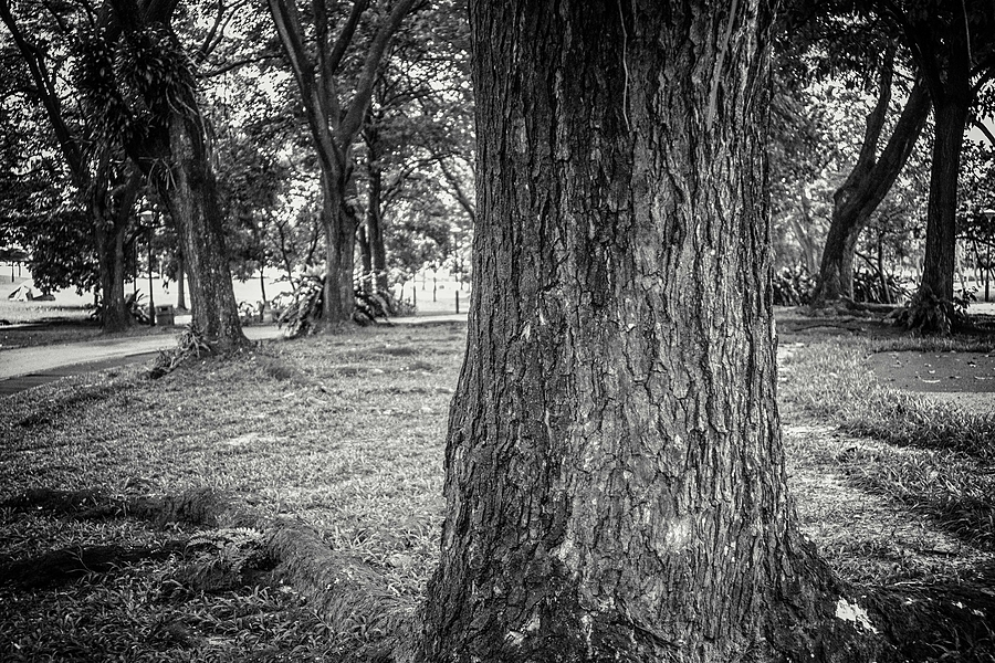 leicaimages.com gallery | A walk in the forest | Leica ELMARIT 28mm f2.8 | ILCE-6000