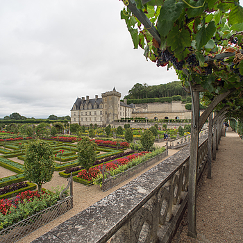 Villandry | LEICA 15MM F/3.5 SUPER ELMAR 1980 (CARL ZEISS DESIGN) <br> Click image for more details, Click <b>X</b> on top right of image to close