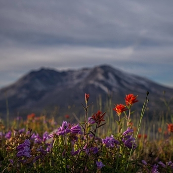 Mt St Helens 1 | LEICA SUMMICRON 35MM F2 ASPH