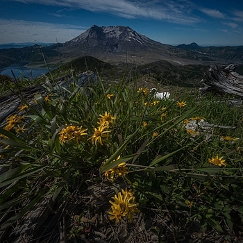 Mt St Helens 5 | CV 12MM / F 5.6 ULTRA WIDE HELIAR M-BAJONETT <br> Click image for more details, Click <b>X</b> on top right of image to close