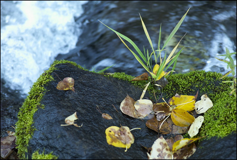 Wet Fall | CV 75MM / F 2.5 COLOR HELIAR <br> Click image for more details, Click <b>X</b> on top right of image to close