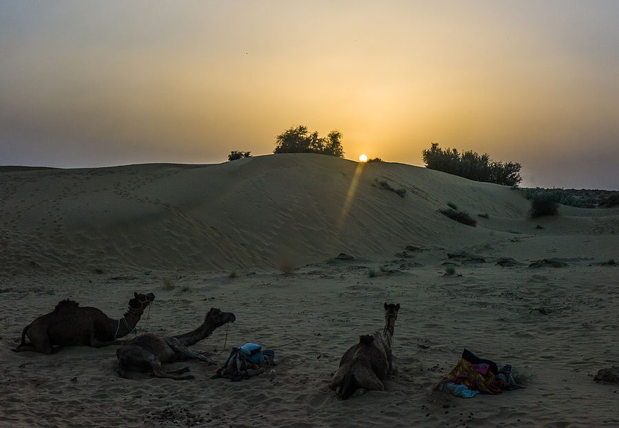 Thar Desert Sunset | VOIGTLANDER 35MM / F 2.5 COLOR SKOPAR CLASSIC <br> Click image for more details, Click <b>X</b> on top right of image to close