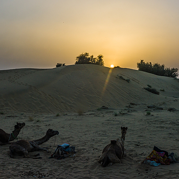 Thar Desert Sunset | CV 35MM / F 2.5 COLOR SKOPAR CLASSIC